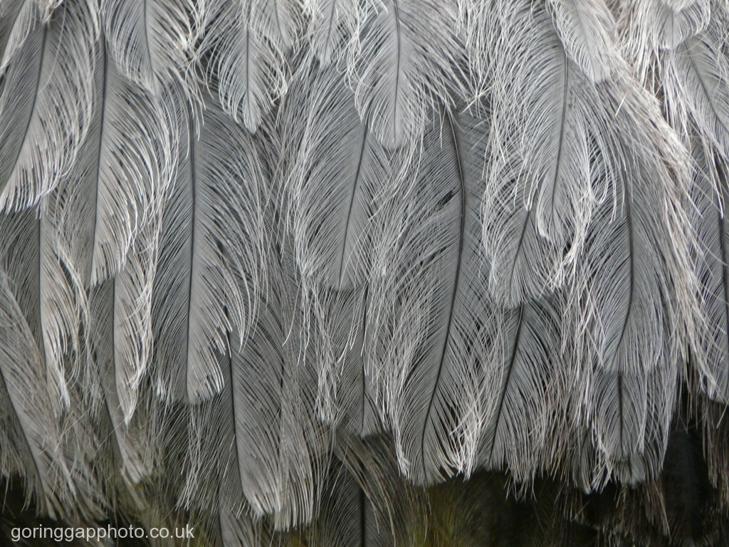 FEATHERS by Gill Cranshaw