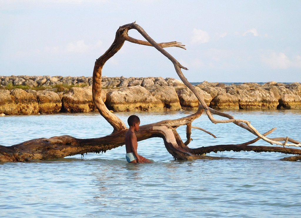 DRIFTWOOD by Isobel Green