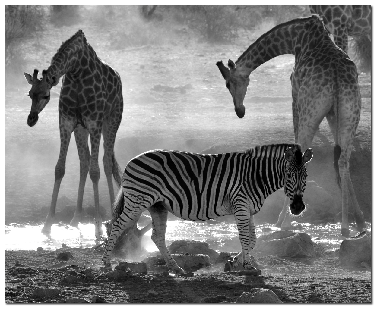 WATERHOLE by Alex Kellas