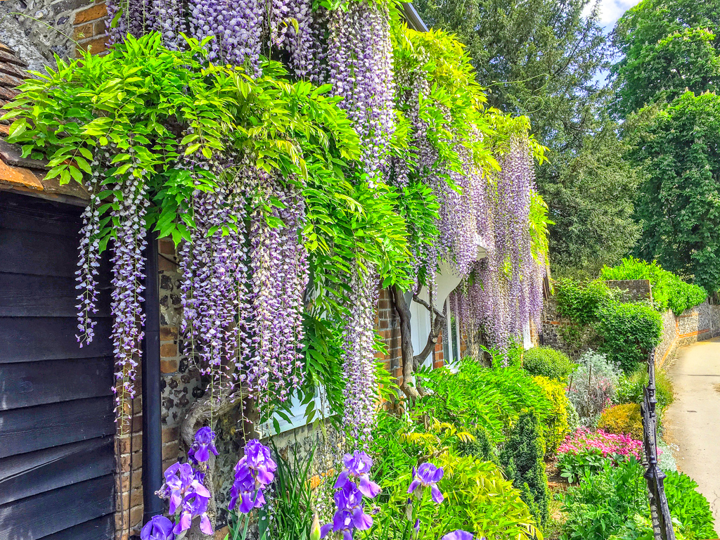 BRIDGE COTTAGE WISTERIA by Chris Stevens