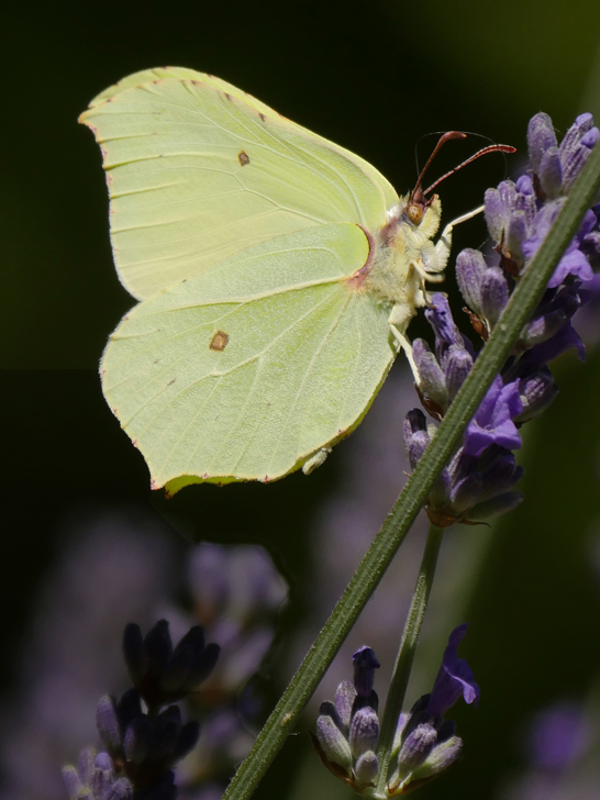 BRIMSTONE by Peter Brass