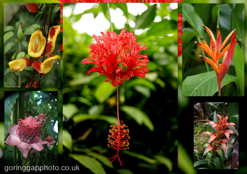 EXOTIC FLOWERS AT THE EDEN PROJECT by James Ashworth