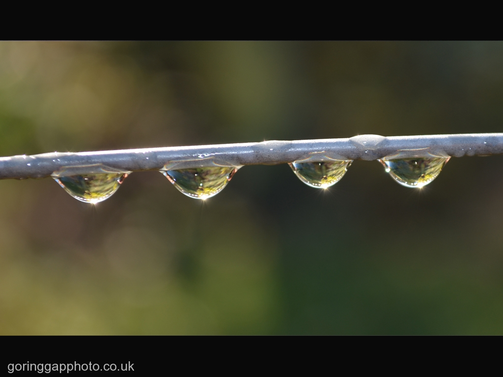 MORNING DEW by Gill Cranshaw