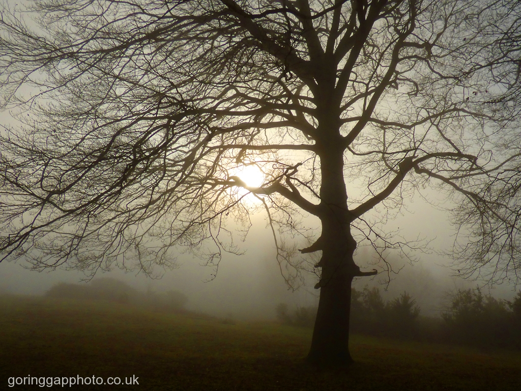 AUTUMN MISTS ON THE HOLIES by Janet Phillips