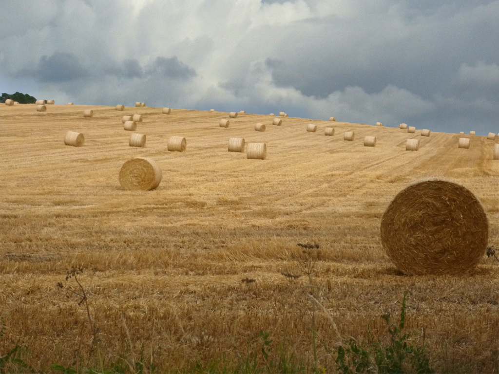 HARVEST SAFELY GATHERED IN by Janet Phillips