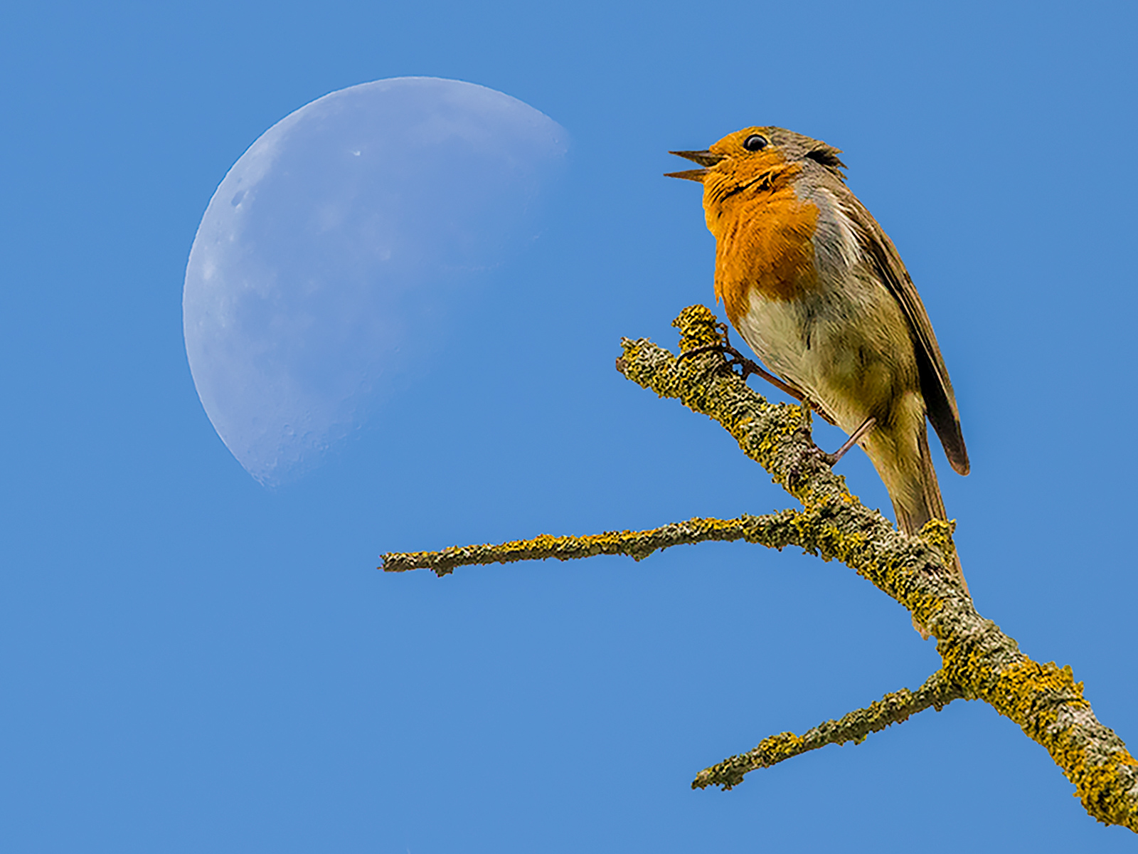 FLY ME TO THE MOON by Chris Stevens
