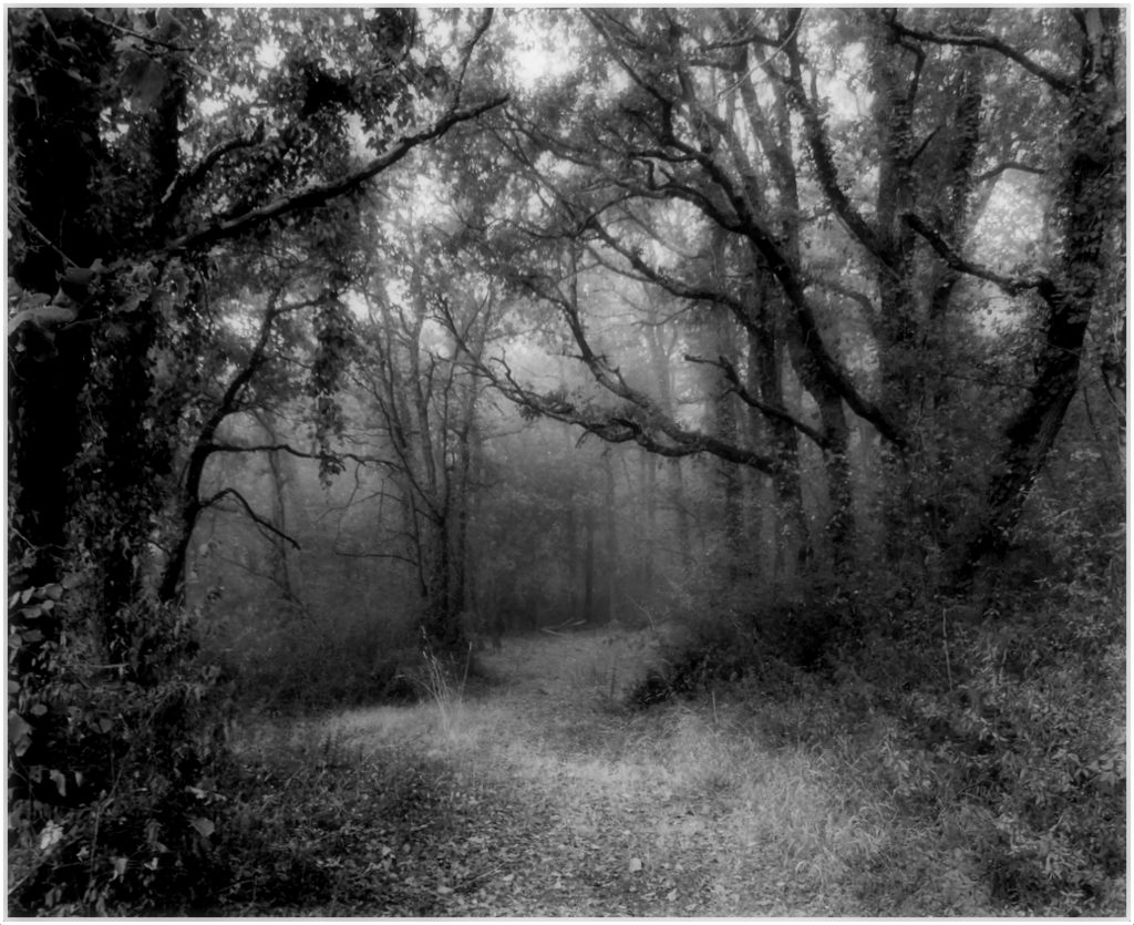 ENCHANTED FOREST by Brian Davies