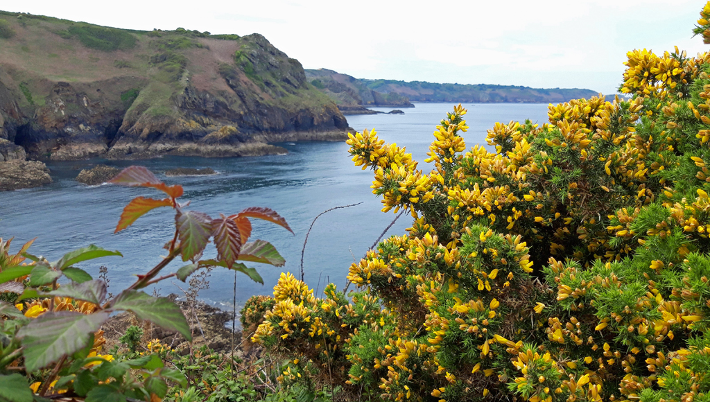 JERSEY COASTLINE by Ruth Lysons