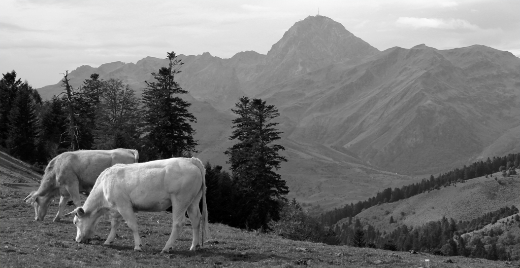 PYRENEAN PASTURE by Dick Lysons
