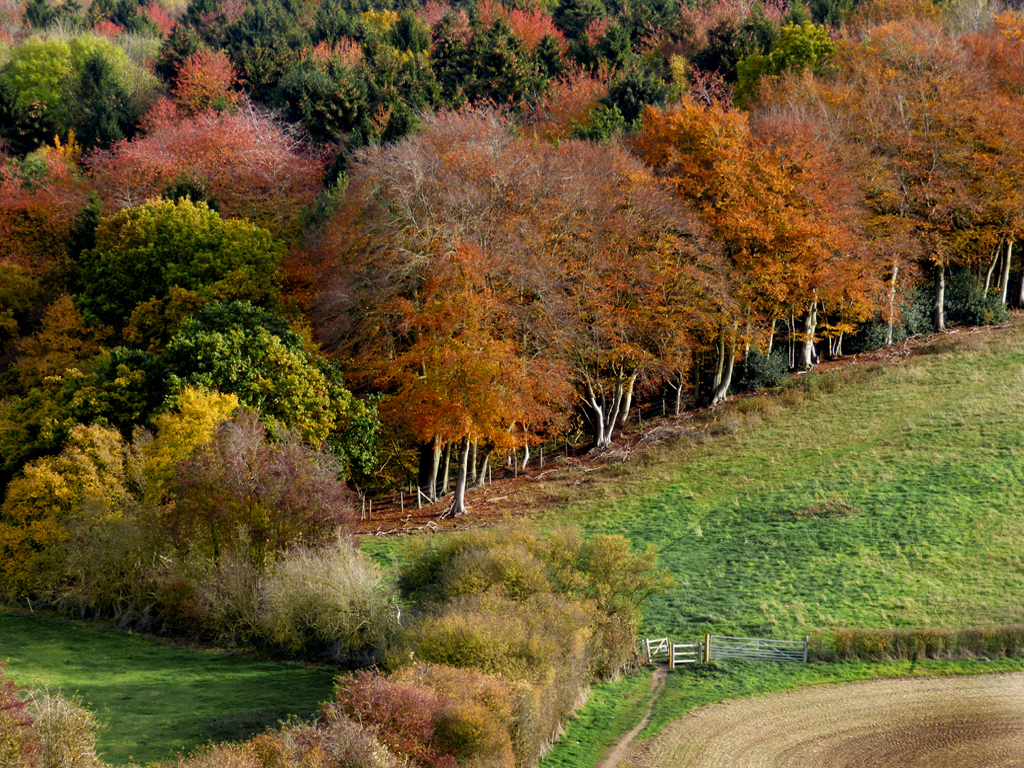 Copy-of-GREAT-CHALK-WOODS-IN-AUTUMN-by-Janet-Phillips